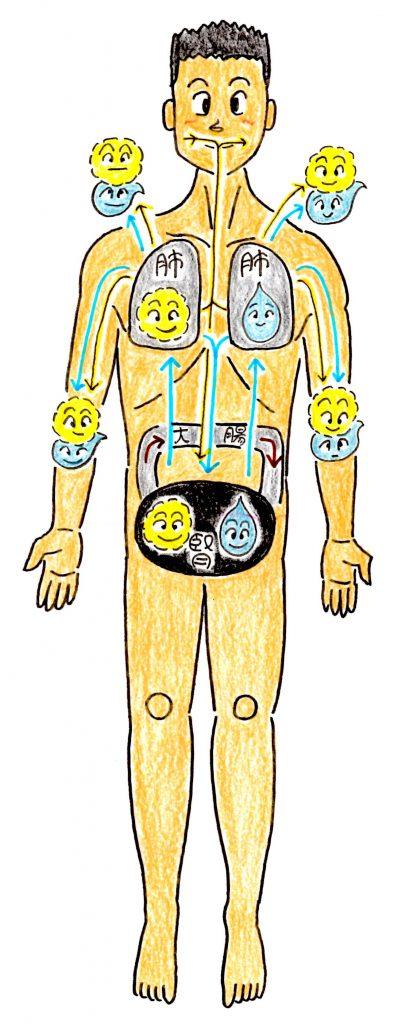 五臓六腑肺の働き