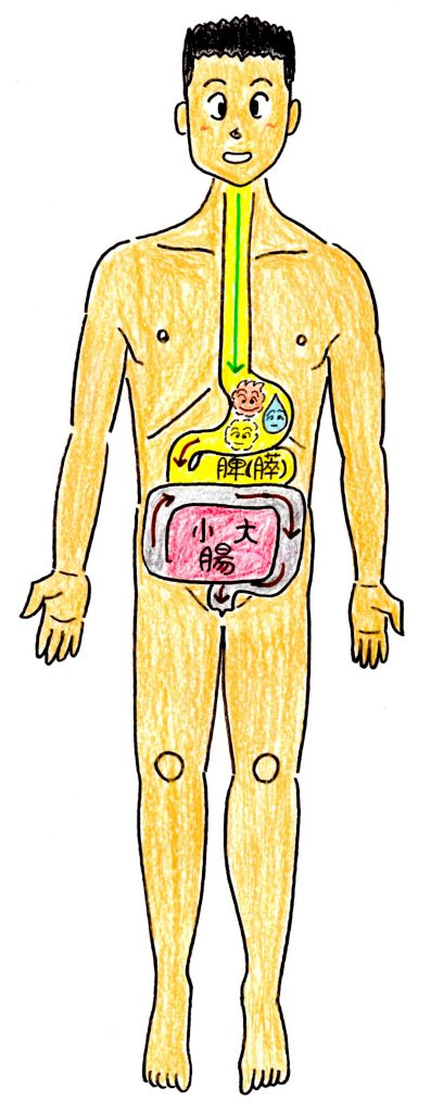 五臓六腑胃の働き